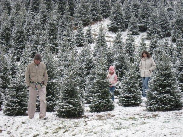 Boyd Mountain Tree Farm In Waynesville N C Sells Fraser Firs Through Dec 23 North Carolina Produces More Chri N Carolina Nc Mountains North Carolina Homes