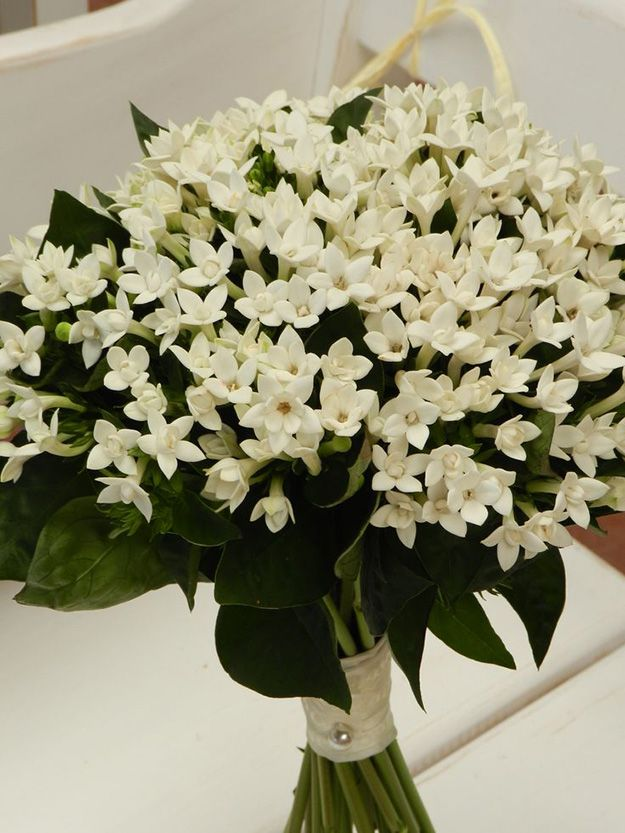 Wedding Ideas By Colour White Flowers Chwv Flowers Bouquet Bouvardia Wedding Bouquet White Wedding Bouquets