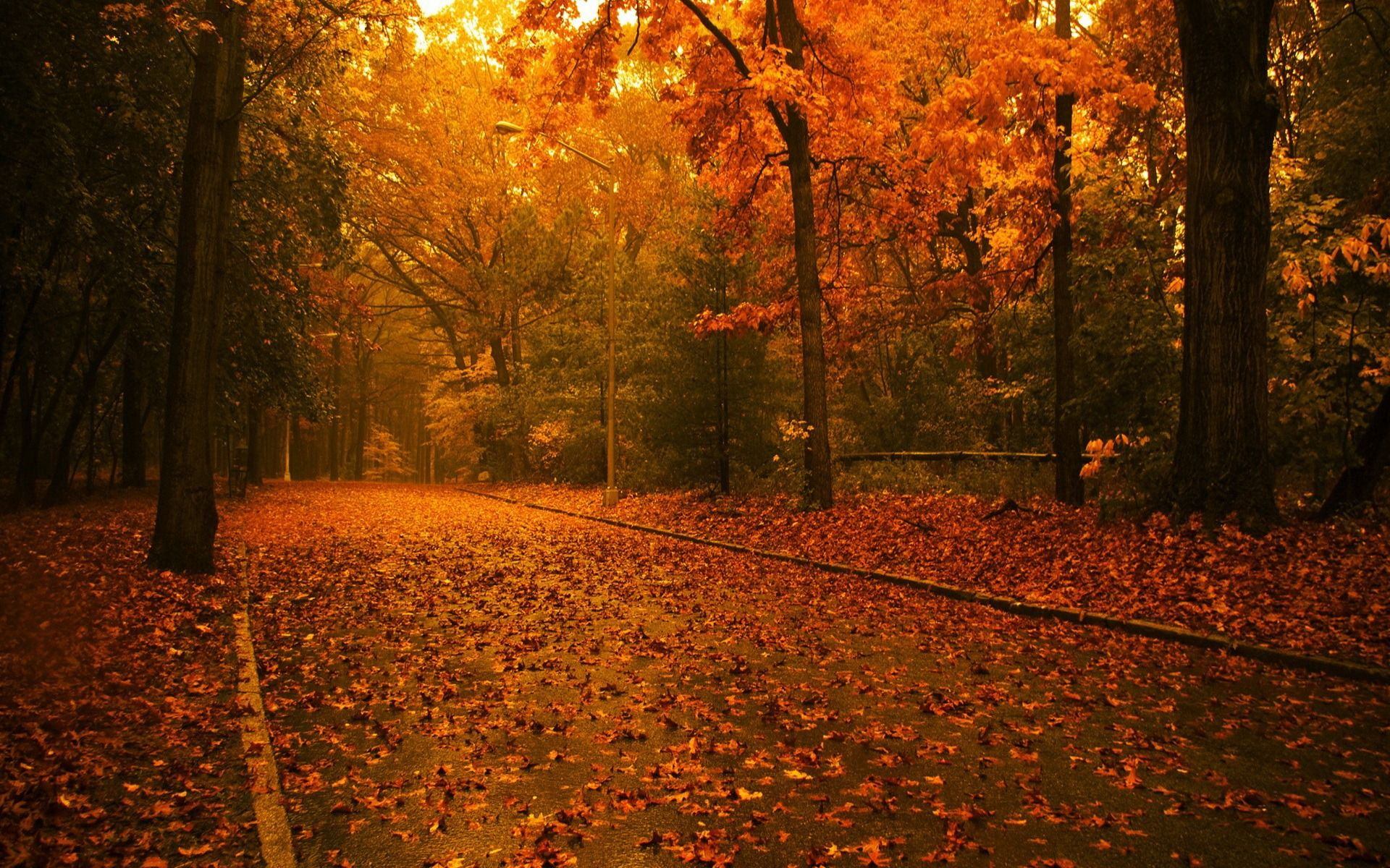 Fall Backgrounds | Autumn Widescreen Wallpaper thumb ...