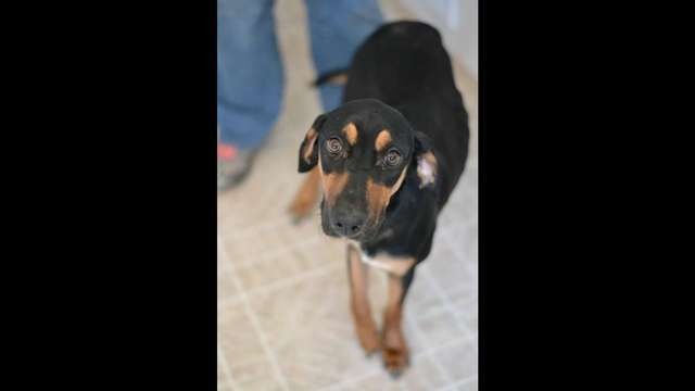 Perfect Pets Rescue Inc Posted A Story Update On Bunnie S Freedom With Images Animal Rescue Rescue