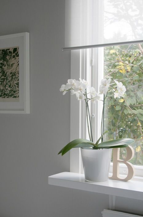 Love the ENJE blinds from Ikeaorchid letter HOME