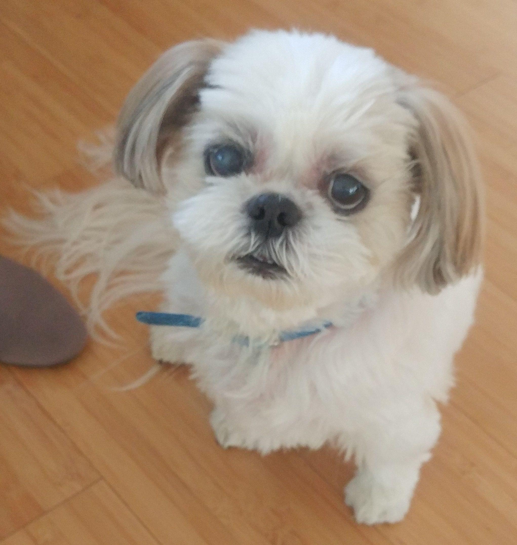 Adopt Angel On Top 10 Cutest Animals Dog Adoption Cute Animal Illustration