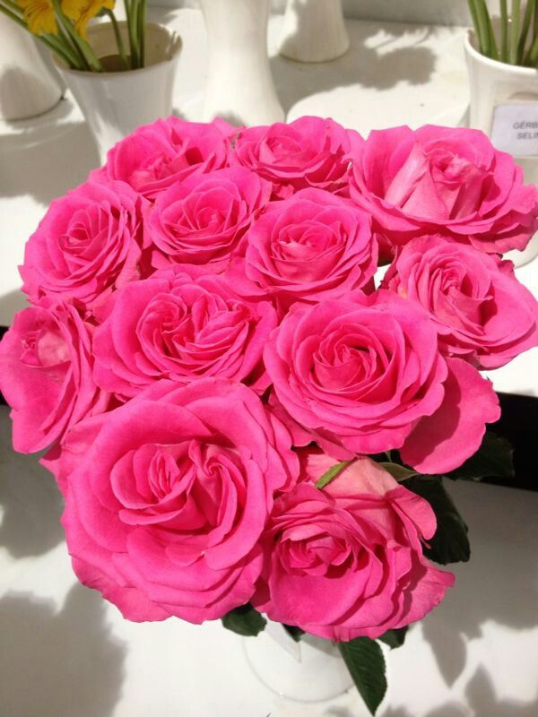 Festa flores Atibaia SP