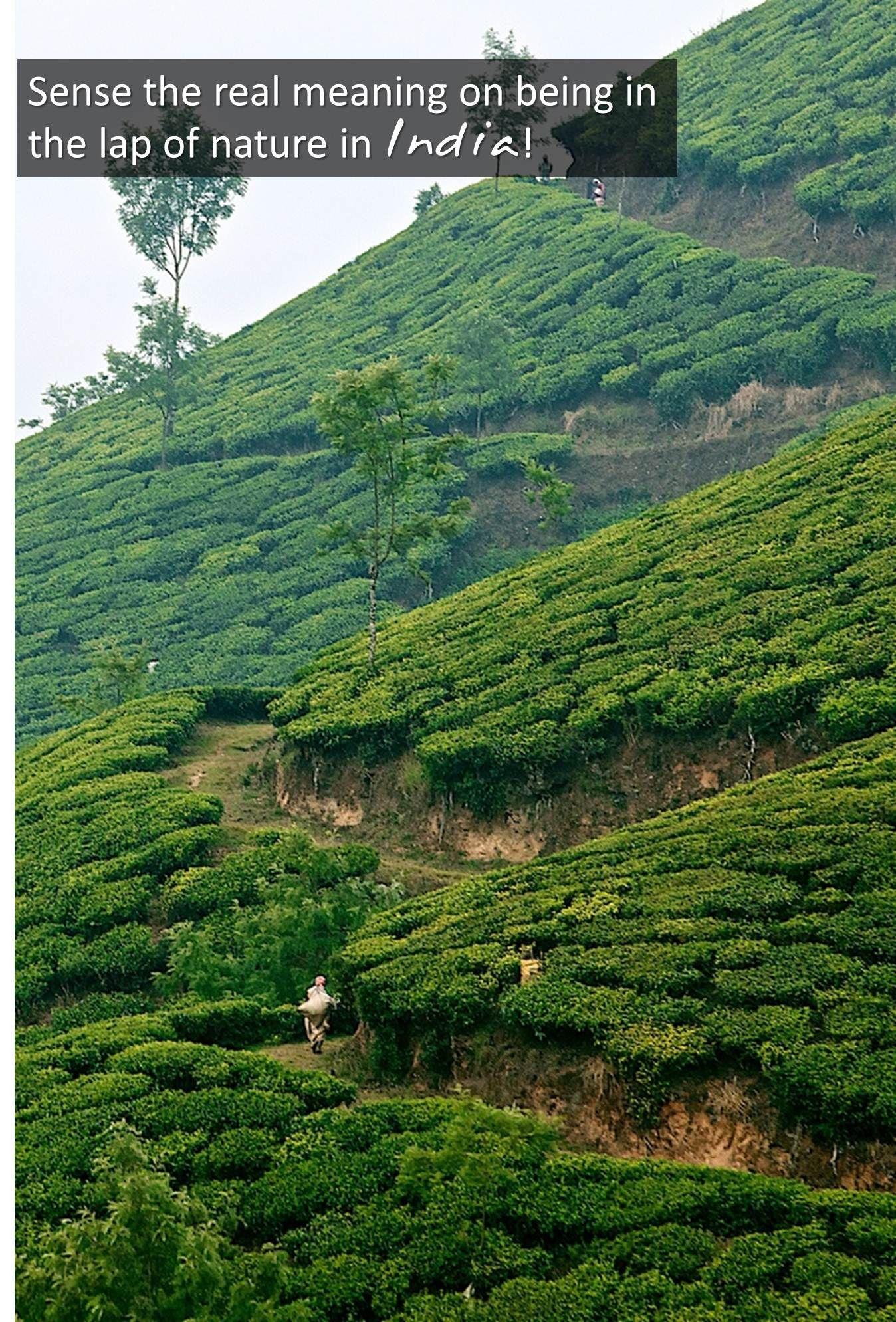 www.indianzing.in Kerala, Munnar