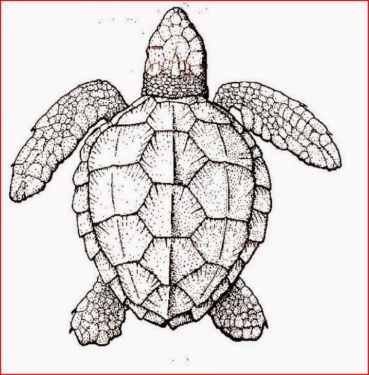 turtle free printable coloring pages coloring.filminspector.com ...