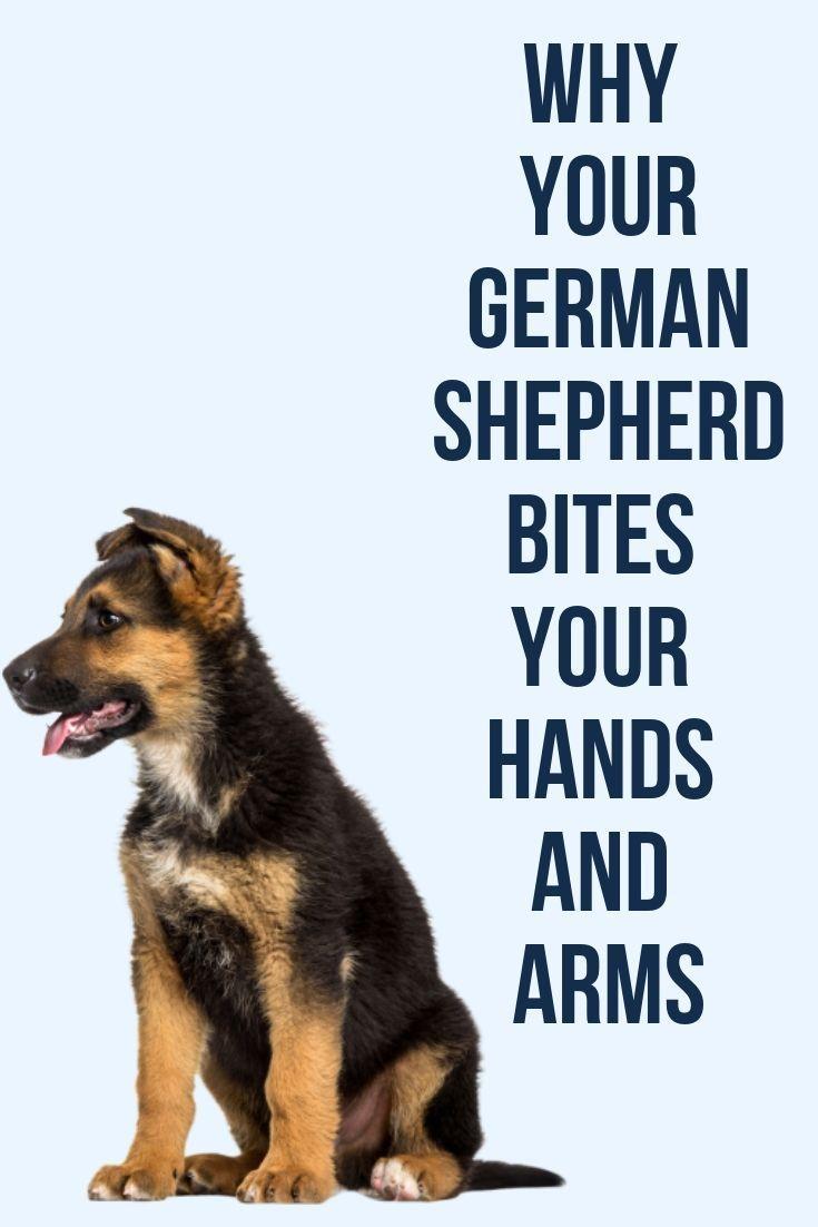 Pin By David On Yup German Shepherd Puppy Funny German Shepherd