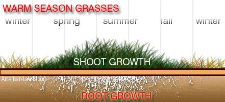 Growth Pattern Warm Season Grass / Identifying grass types | Turf ...