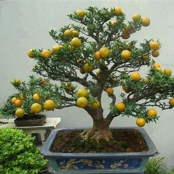 60 Best Bonsai Tree Ideas, The Complete Know How - Enjoy Your Time #bonsaiplants