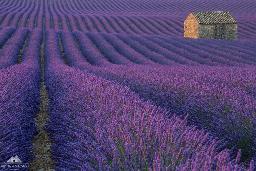 Lost in a purple field by Marco Grassi - Photo 151903769 / 500px