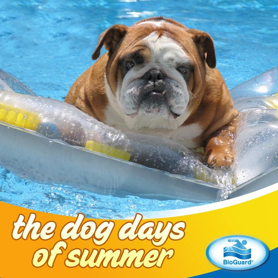 #dog #days #summer #RVA #swimming #pool