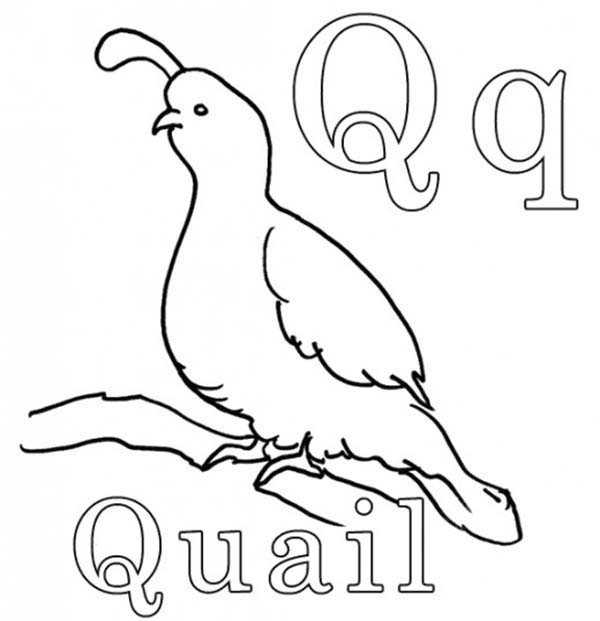 Quail For Letter Q Coloring Page Bulk Color Coloring Worksheets For Kindergarten Kindergarten Coloring Sheets Color Worksheets