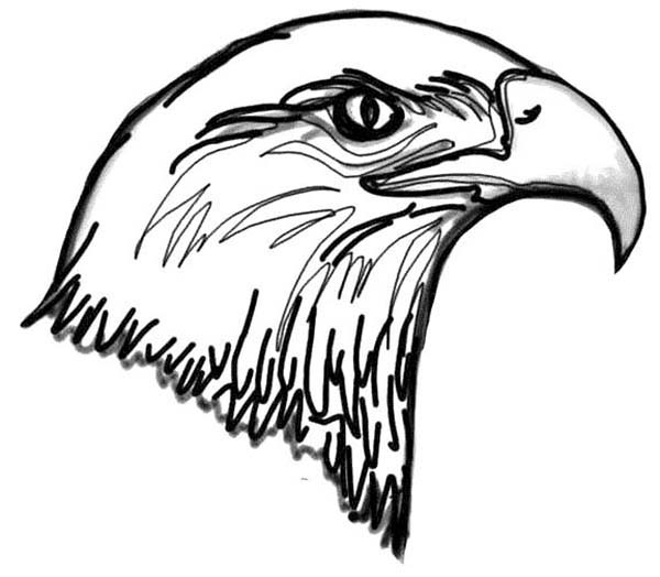 Pin By David On Bald Eagle Coloring Pages Bald Eagle Eagle Head Coloring Pages