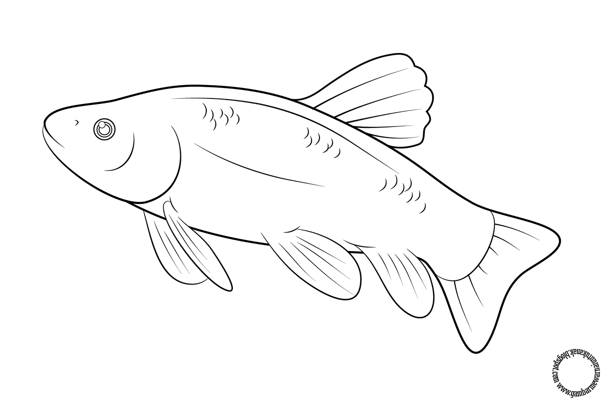 Gambar Mewarnai Ikan Untuk Anak Gambar Mewarnai Anak Pinterest