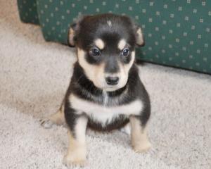 Adopt Peanut On Labrador Retriever Dog Retriever Dog Labrador Retriever Mix