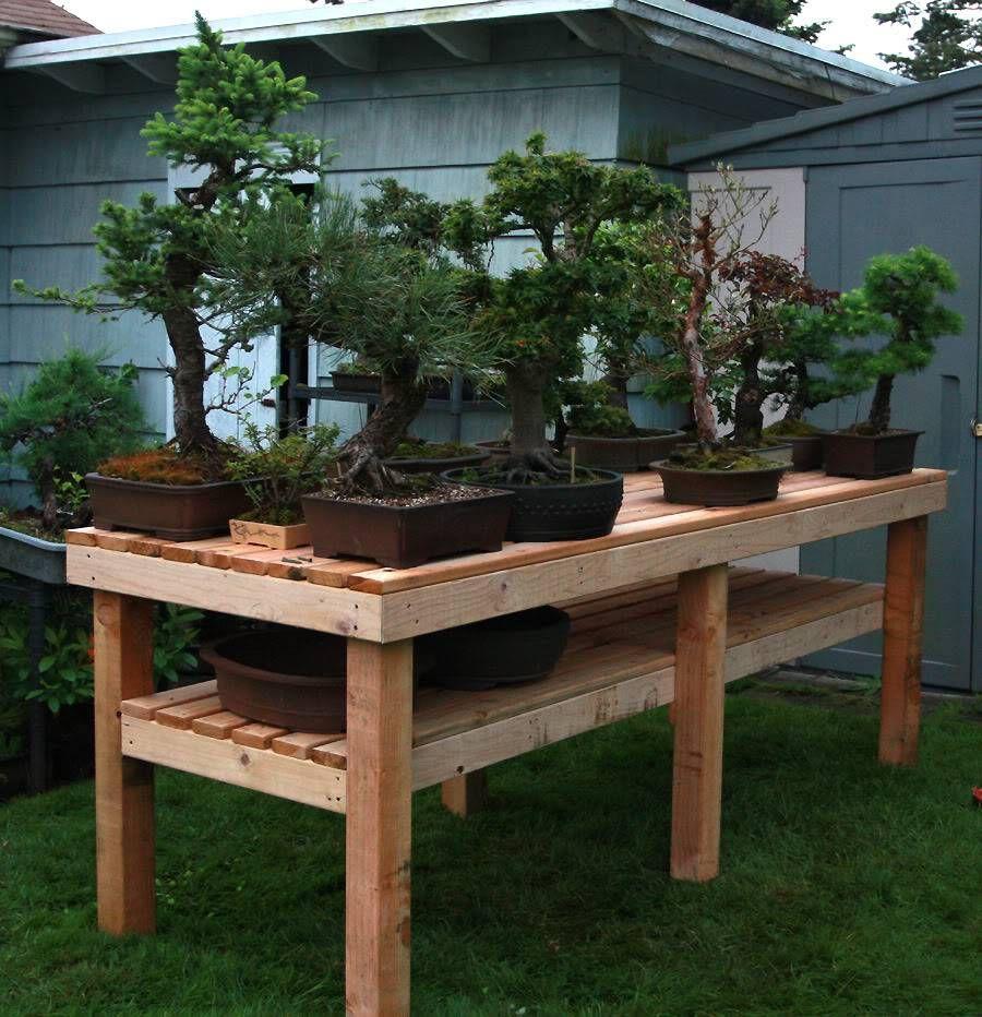 Pin By Mark Reynolds On Garden Bonsai Bonsai Trees For Sale Indoor Bonsai Tree