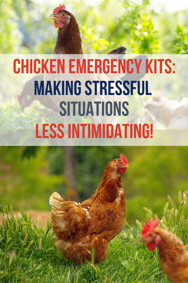 Good info for backyard chicken beginners! Learn what you ...