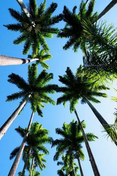 palm trees tumblr vertical. Palm Trees By Flynn Conlon Beach Illustrated Tumblr Vertical
