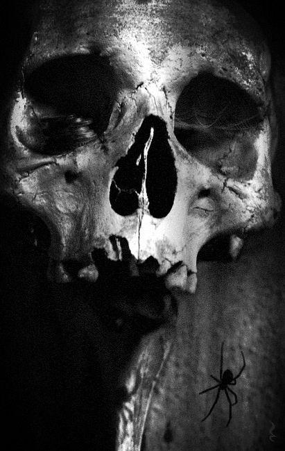 Skull and bones sex