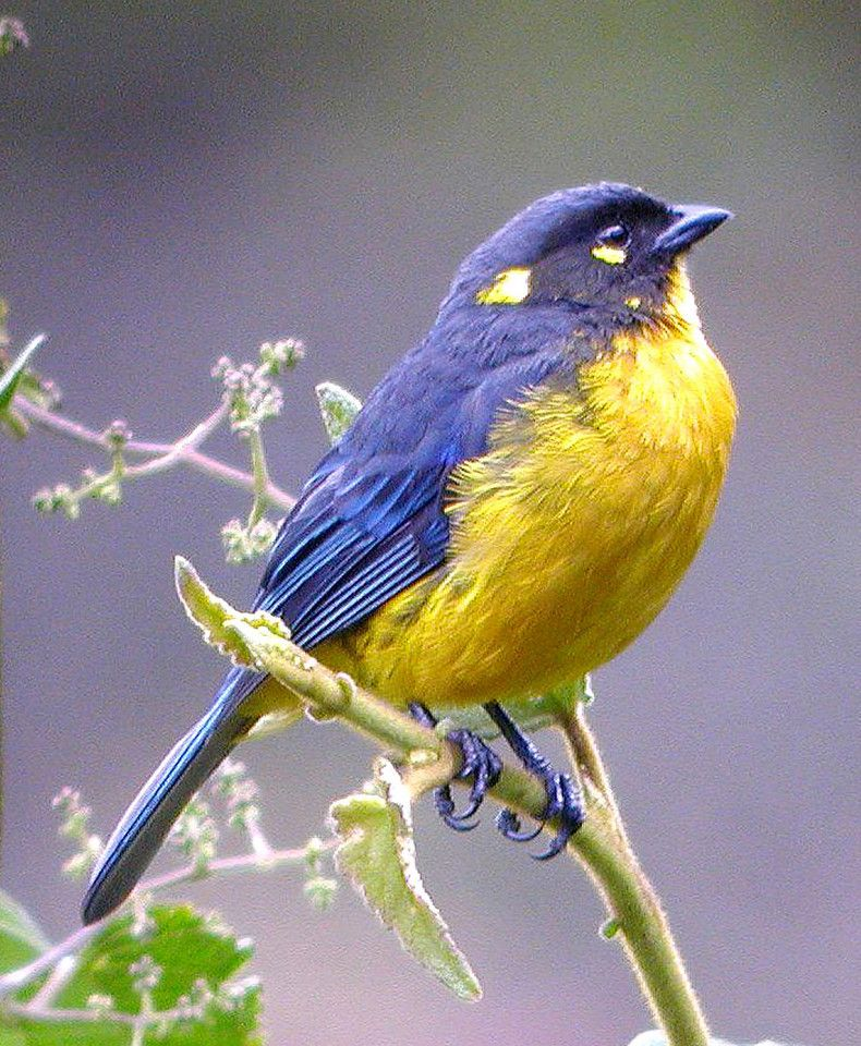 Best Of Bolivian Animals And Plants 50 Ideas On Pinterest Animals Bolivian Animals Beautiful
