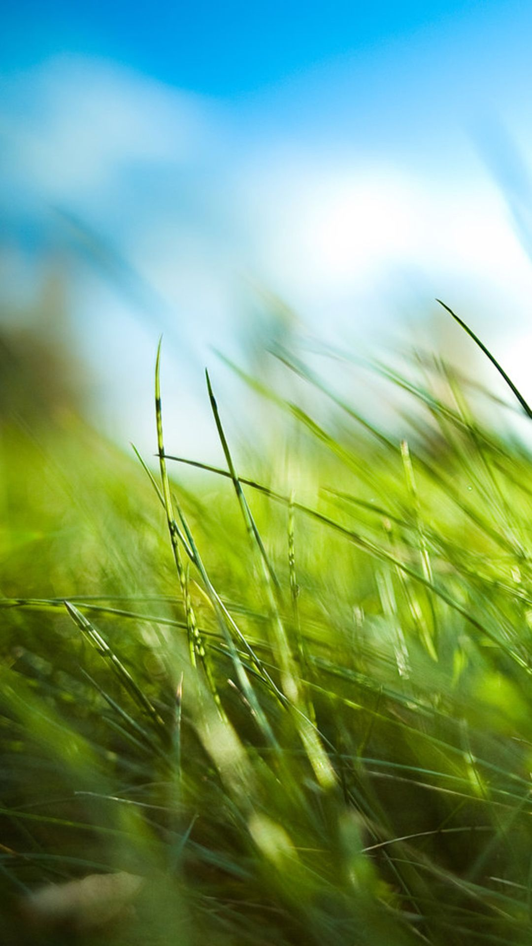 Wallpaper iphone hd retina - Nature Sunny Blue Sku Green Grassland Field Iphone 6 Plus Wallpaper