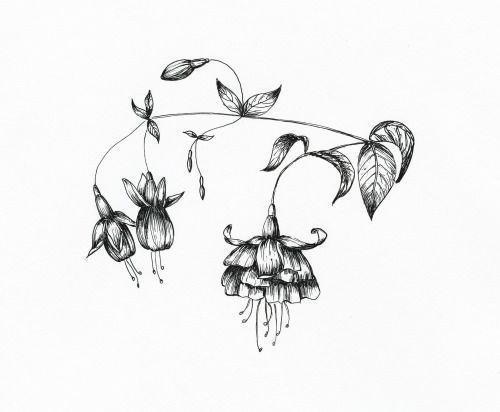 Ink flower illustration Art by KKhrysty