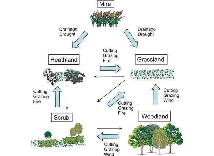 Ecosystem Diagram | Fig 1  Schematic diagram indicating