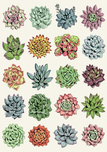 Succulents Con Imagenes Dibujos Botanicos Arte Vegetal Arte