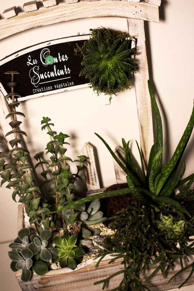 Le Jardin Succulent - Composition de plantes grasses - décoration ...