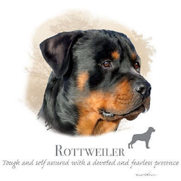 Rottweiler Dog T Shirt Graphics Womans Style T Shirt Size S M L Xl