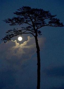 Fases da Lua #moon #night #Lua-cheia | Lindas paisagens ...