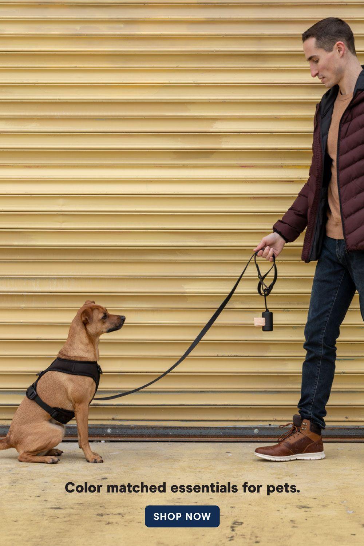 Harness Walk Kit Dog Training Dog Walking Dog Training Near Me