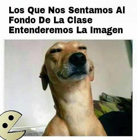 Memes Chistes Humor Funny Invequa Perro Perros Memes En Espanol Memes De Perros Memes Memes Funny Spanish Memes Book Memes