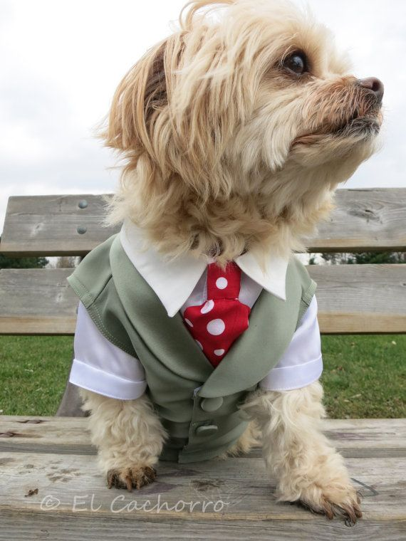 Complete Custom Dog Wedding Vest Tuxedo with Detachable Ring Pillow