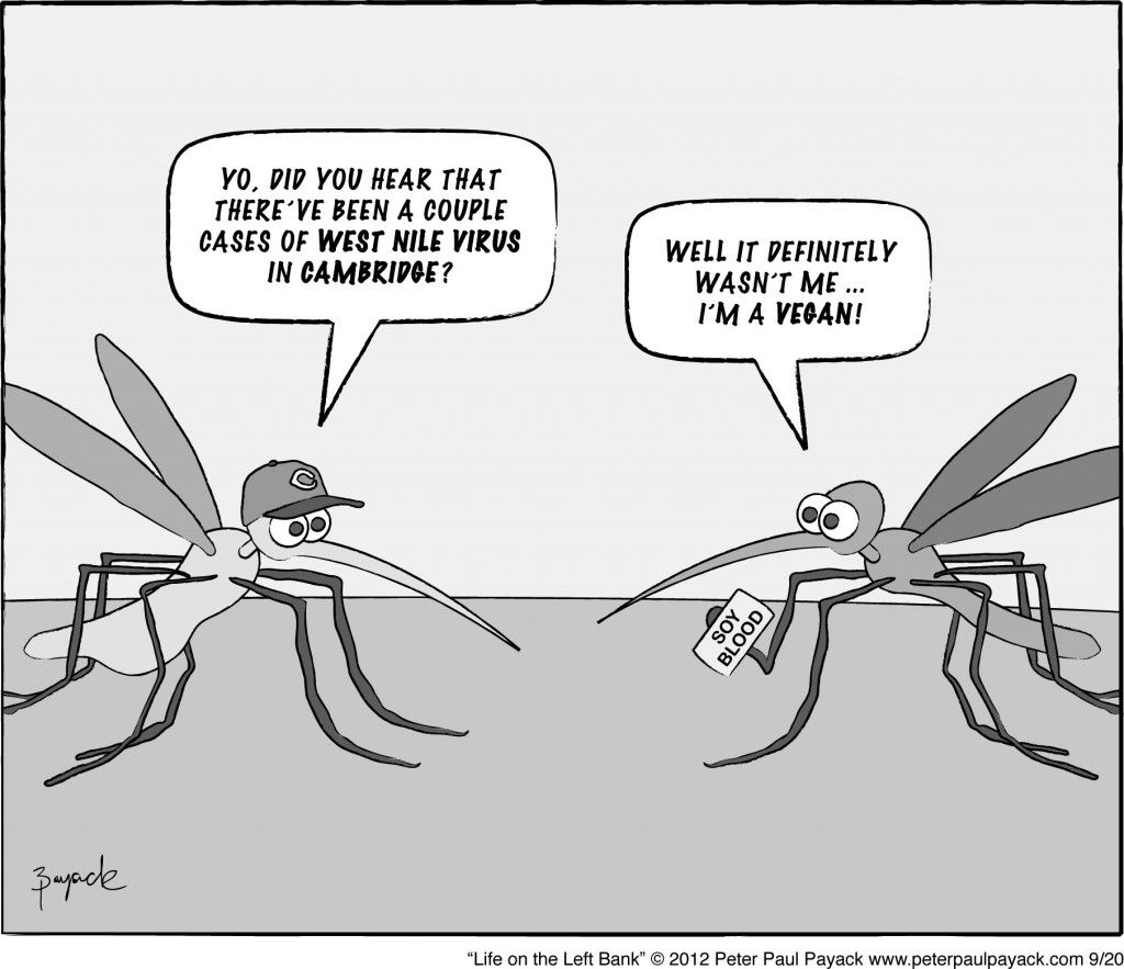 A conversation between two Cantabrigian mosquitoes! funny