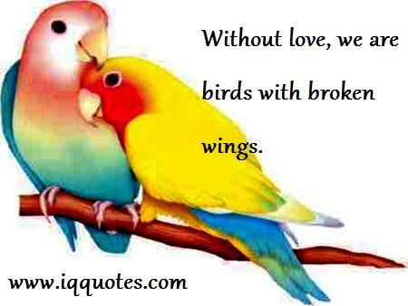 Love Bird Quotes Love Bird Quote Love Bird Quotations Quotes With
