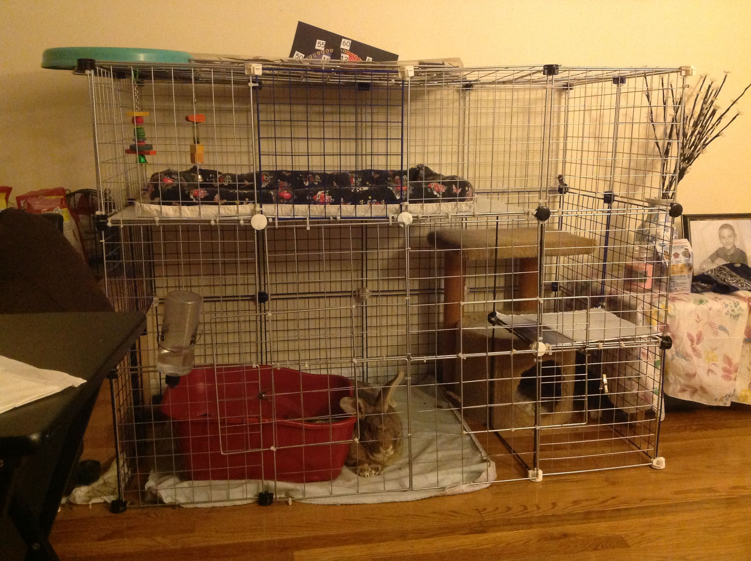Pin on Rabbit cage - photo#5