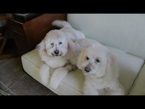 Bagno Cane ~ Come lavare il proprio cane la prima vittima è luna luoghi da