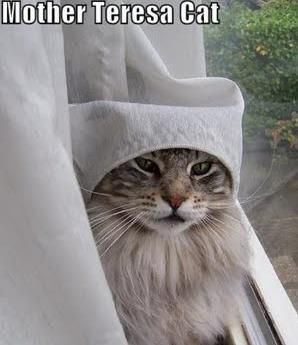 Mother Teresa Cat :)
