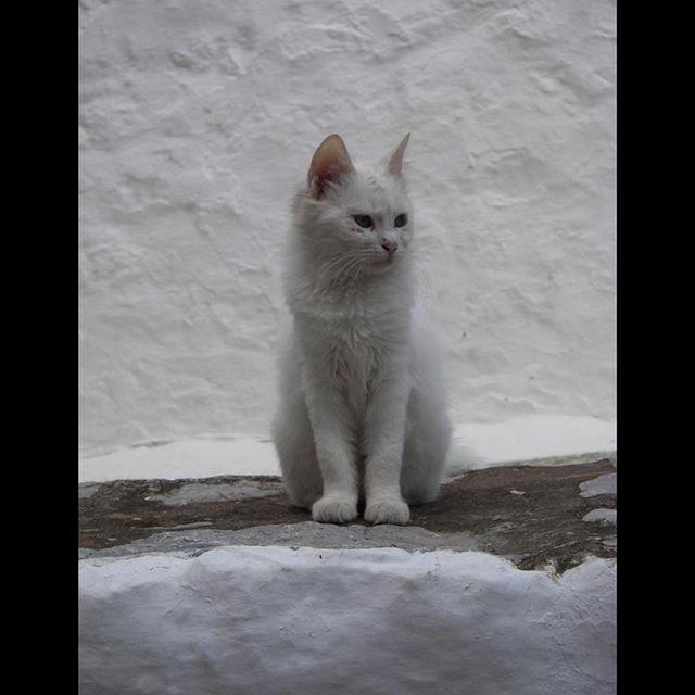 ️MonChatDoré?⠀ •⠀ •⠀ •⠀ •⠀ •⠀ #chat #cat #jaimemonchat #monchat #adorable #chatinstagram #passionchat #instachat # ...