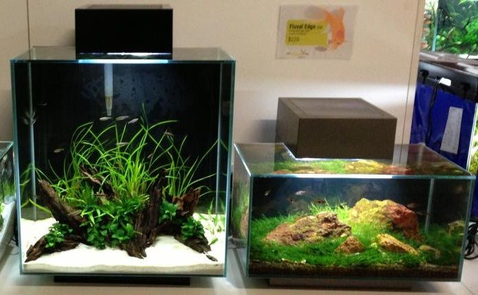 Charming Fluval Edge Aquascapes By Icepotatoe89