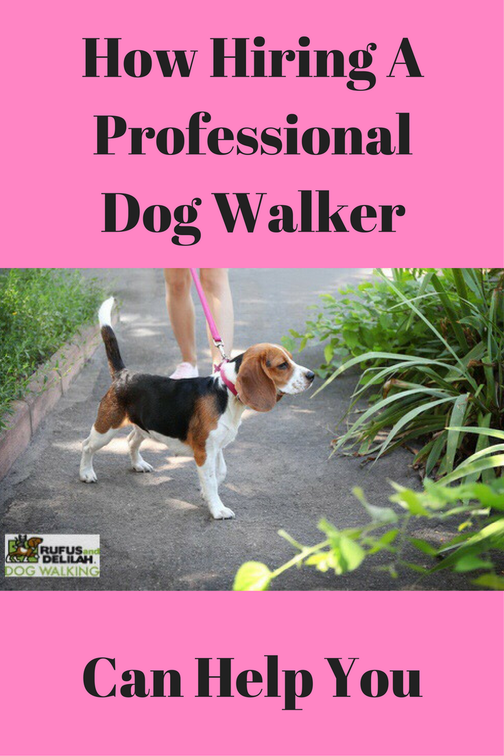 How Hiring A Professional Dog Walker Can Help You Dogs Dog Walking Services Dog Walker