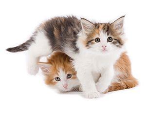 Koiranpentu Ja Kissanpentu Google Haku Animals Cats Royal Canin
