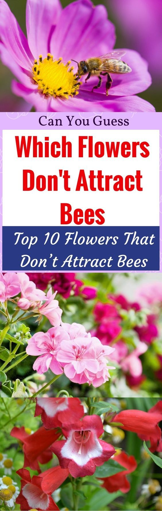 Can You Guess Which Flowers Don T Attract Bees Top 10 That