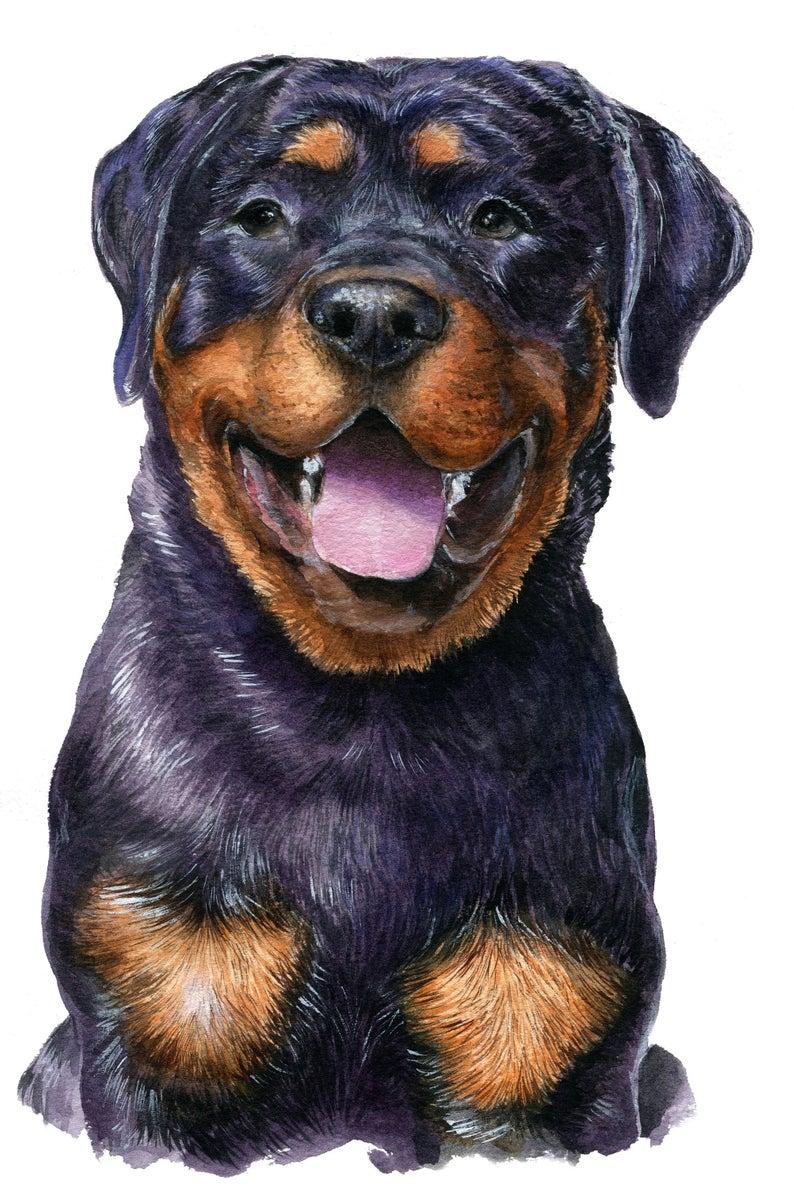 Rottweiler Dog Portrait Custom Painting Watercolor Dog Etsy Dog Portraits Watercolor Dog Rottweiler Dog