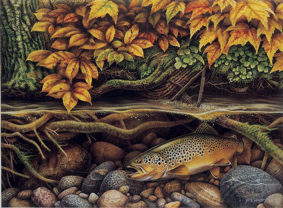 Autumn Brown Trout Painting by JQ Licensing - Autumn Brown Trout