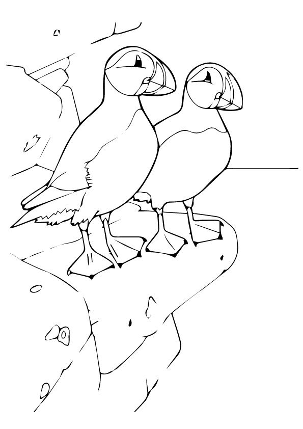 78 puffin bird coloring page puffins coloring pages for Puffin coloring pages to print