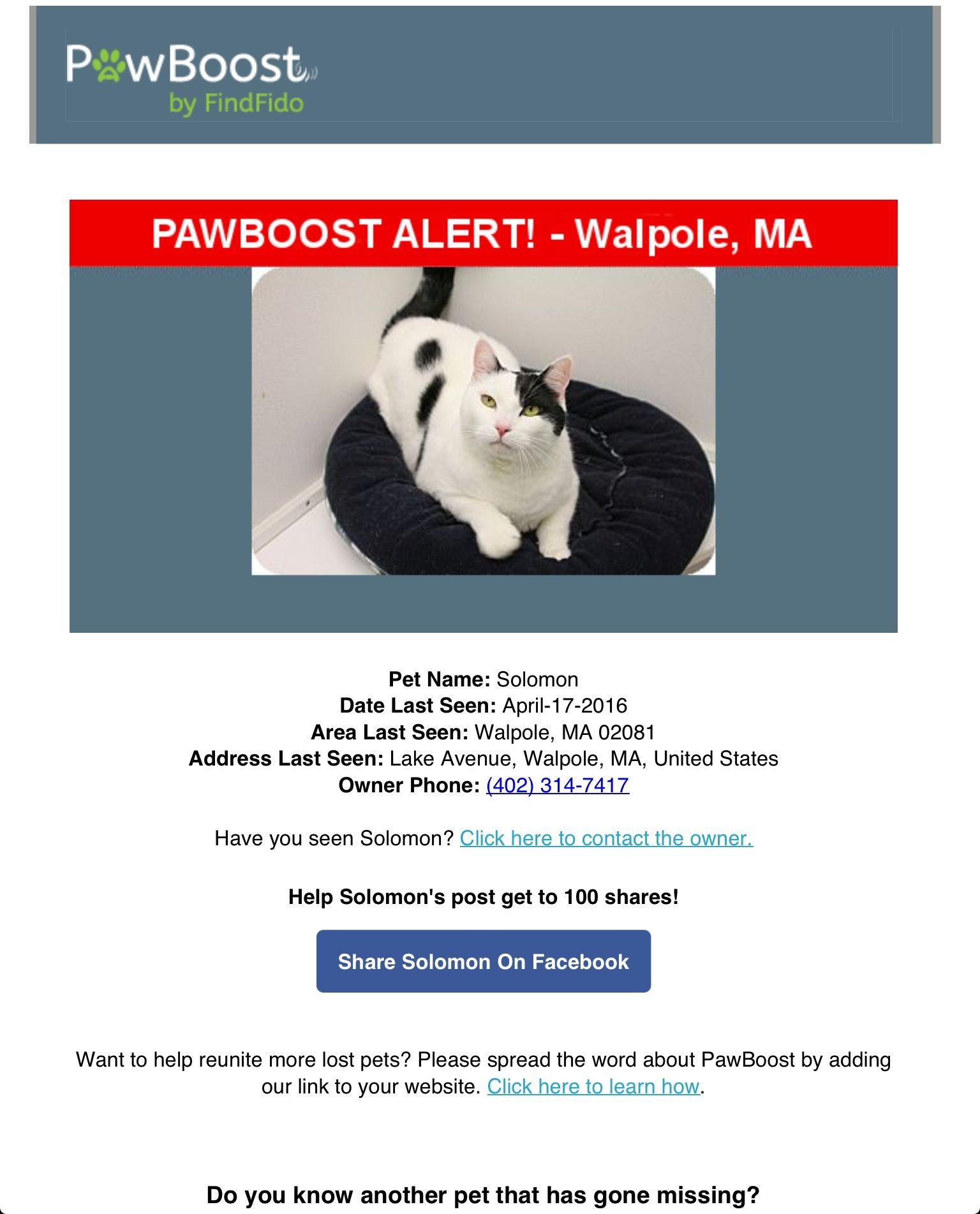 Lost Cat Named Solomon Walpole Ma Lost Cat Pet Names Cat Names