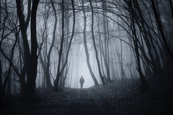 Silhouette in surreal woods by Atmospheric visuals on @creativemarket