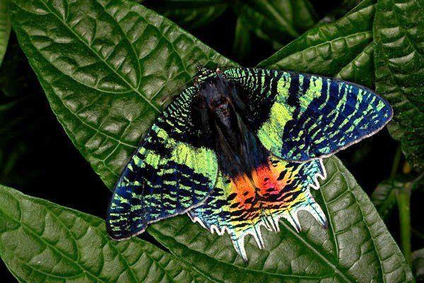 13 самых красивых бабочек в мире: названия, описание, фото ...