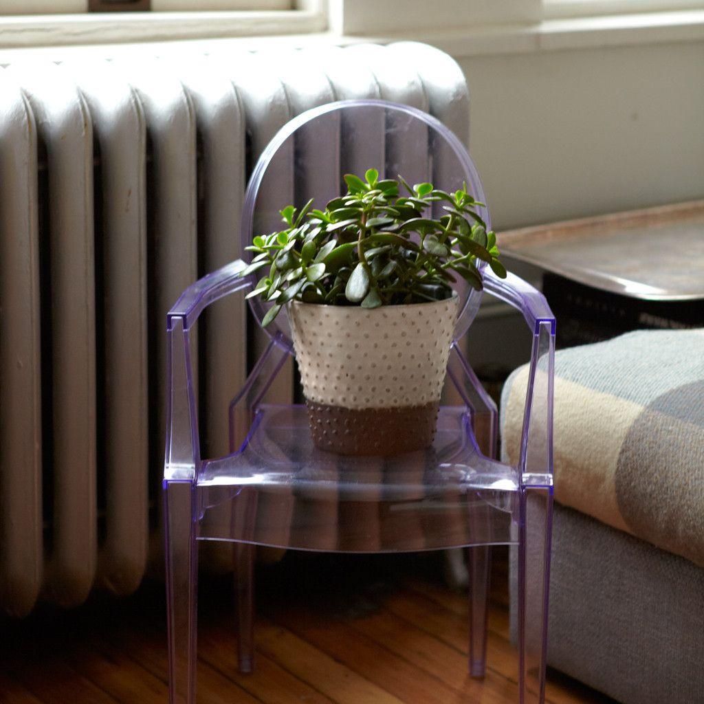 Indoor Plants, Living Room Plants, Plants
